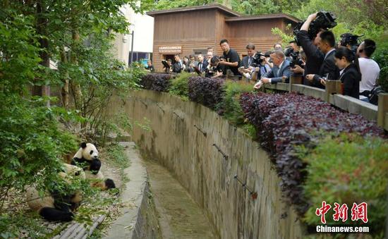 丹麦首相拉斯穆森专程来到成都大熊猫繁育研究基地