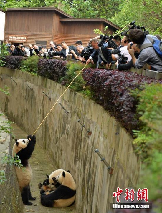 丹麦首相拉斯穆森喂大熊猫吃苹果