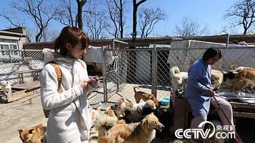 王漫舒直播民间流浪动物救助者