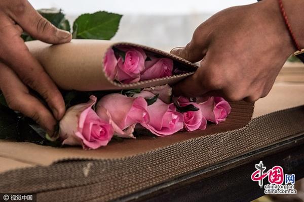 رحلة باقة من الزهور في الصين