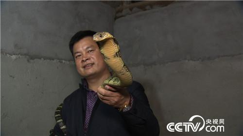致富经:毒蛇变乖 凶猛来财(20170509)