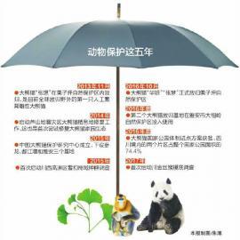 伞护大熊猫和它的小伙伴