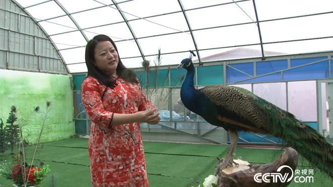 爱美女人养坏脾气的鸟 年入300万