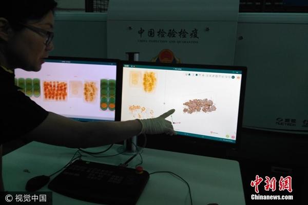جمارك الصين تضبط عمليات تهريب للنمل الحي
