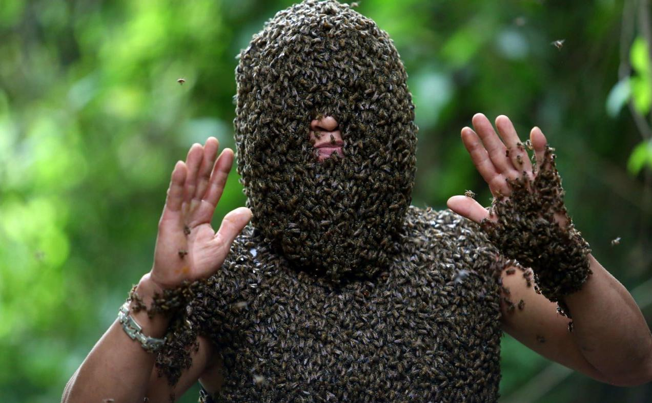 17123ff5ebf Beekeeper Bui Duy Nhat of Vietnam is able to engage in the art of bee  bearding