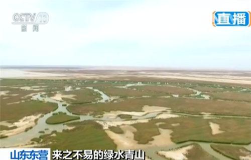 东营的黄河三角洲国家级自然保护区