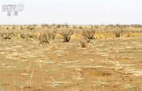 老照片中的黄沙枯草