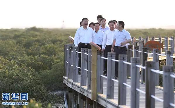 4月19日至21日,中共中央总书记、国家主席、中央军委主席习近平在广西考察。这是4月19日傍晚,习近平来到北海金海湾红树林生态保护区考察。新华社记者 谢环驰 摄