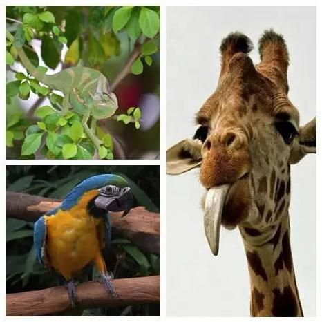 他们和可爱的动物朋友之间,将演绎出怎样妙趣横生的故事呢?