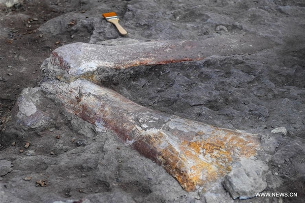 اكتشاف احفور تمساح كامل في شمال شرقي الصين