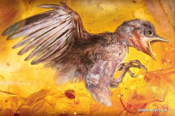 عينة طائر محفوظة في الكهرمان تكشف أسرار الطيور القديمة