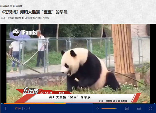 """直播过程中,饲养员对大熊猫""""宝宝""""性格、目前生活状况及回国后趣事等做了介绍。直播进行了近一个小时,引发了国内外网友广泛关注。"""