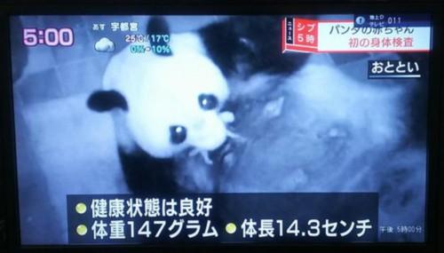 """""""真真""""和熊猫幼崽"""