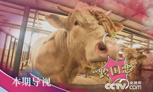 食尚大转盘:夏南牛为啥这么牛 6月18日