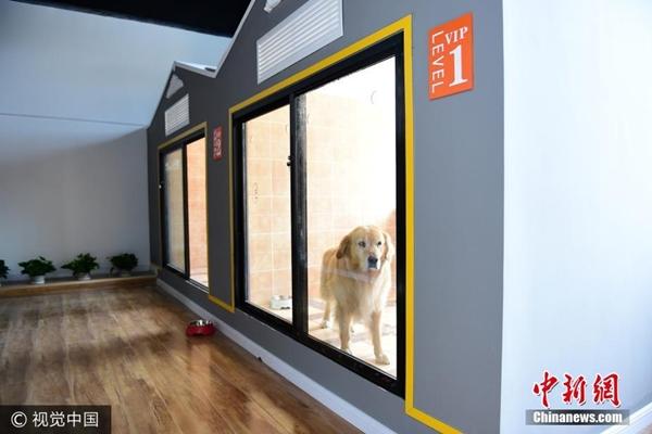 فندق فخم للحيوانات الأليفة يظهر في تشينغداو
