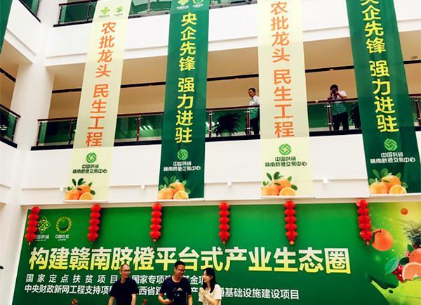 中国农批志在构建赣南脐橙平台式产业生态圈 央视网郑芳摄