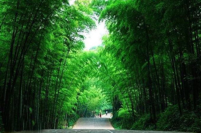 """图片来源于网络 蜀南竹海被誉为竹的海洋、翠甲天下,与恐龙、石林、悬棺并称川南四绝。凭借自身独特的自然资源、优质的旅游服务先后被批准、评选为""""中国国家风景名胜区""""、 """"国家首批AAAA级旅游区""""、""""中国旅游胜地四十佳""""、""""世界'绿色环球21'认证景区"""",""""最具特色的中国十大风景名胜区""""、""""最受群众喜爱的中国十大风景名胜区""""、""""中"""