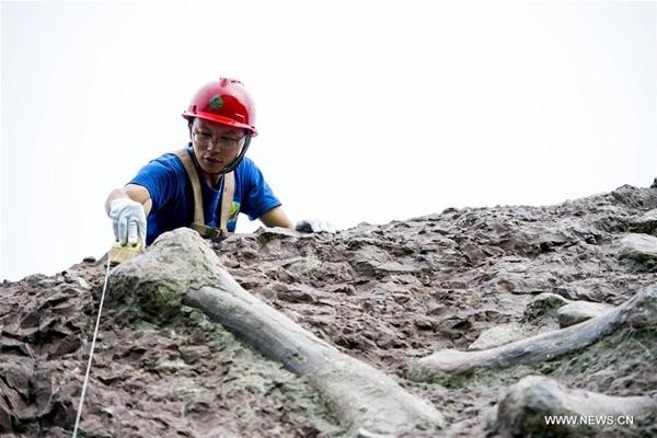 اكتشاف موقع كبير لأحافير الديناصورات في جنوب غربي الصين