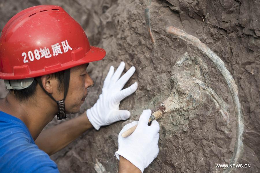 Chine : un grand site de fossiles de dinosaures découvert à Chongqing