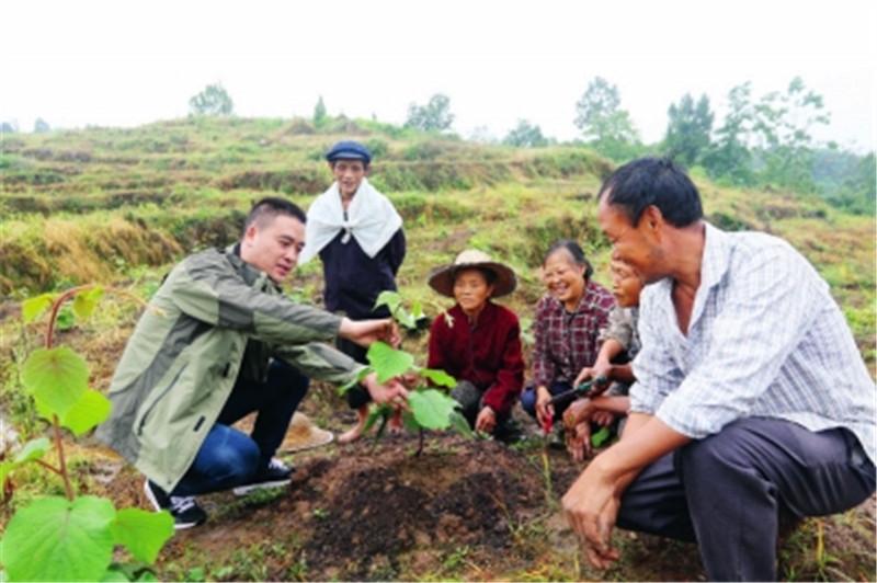 吴成均现场教授村民猕猴桃管护技术。