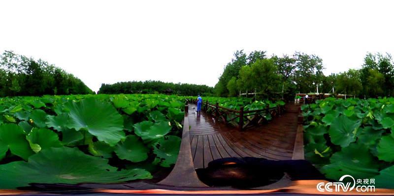 【共舞长江经济带】安徽合肥:一城坐拥两座国家公园