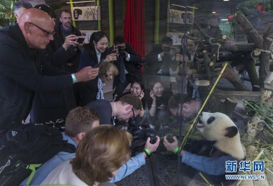 游客纷纷拿起手机拍照