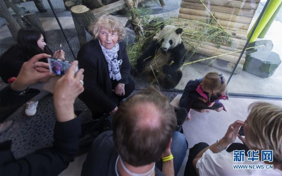 游客与熊猫自拍