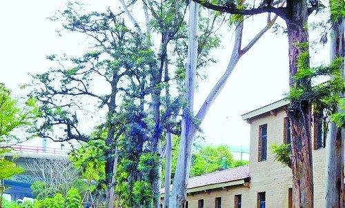 仙岳路1号2407平方米的历史违建被拆除,原地进行绿化景观提升。