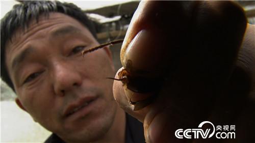 [久久热]黄国忠:久久热胡蜂,用胡蜂蜂蛹赚钱赚了千万财富