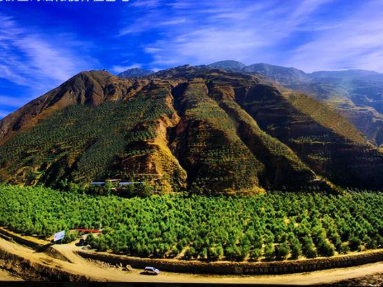 武都区佛堂沟油橄榄种植基地