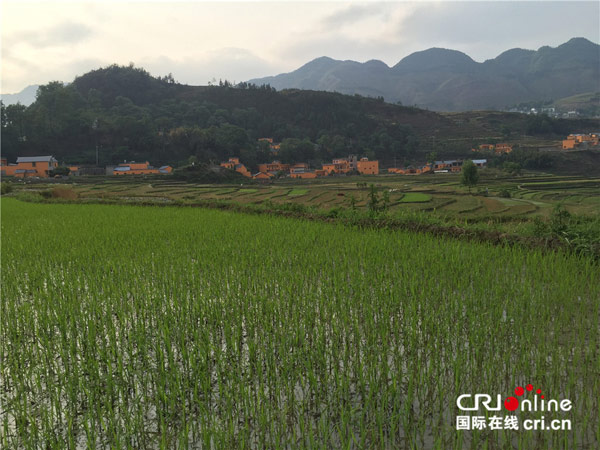 新民镇万亩梯田附近的村庄 摄影:刘娜