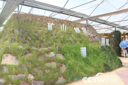 蒙草草原生态博物馆展出的矿山修复效果实景