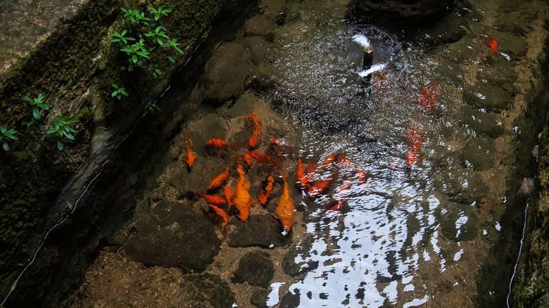 水中鱼儿(图片来源于黄山风景区)