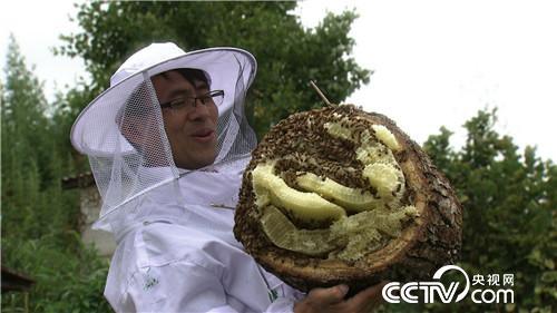 [vinbet浩博首页]陈北京:山东小伙儿养东北黑蜂,追寻千里之外的财富