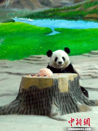 """大熊猫品尝特质的""""果肉冰点"""""""