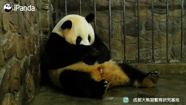 """大熊猫""""妮妮"""""""