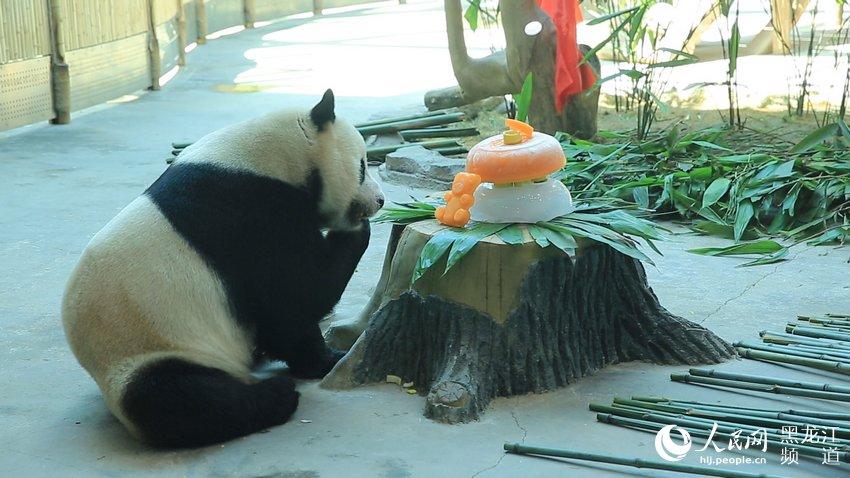 "大熊猫""佑佑"""