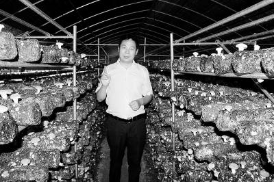 """【砥砺奋进的五年】小菌菇""""长成""""脱贫大产业"""