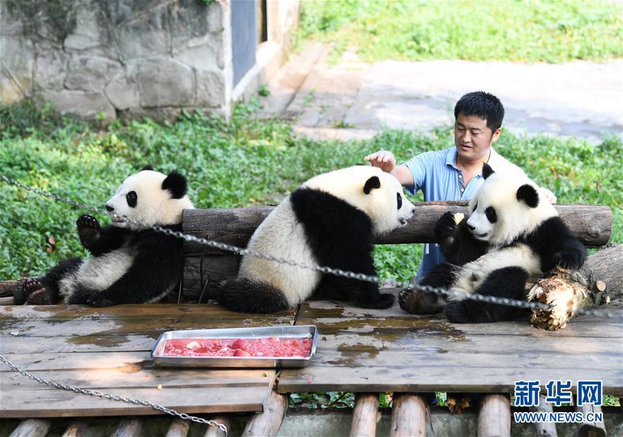 学博士毕业后,尹彦强便来到熊猫馆工作,开始了养育大熊