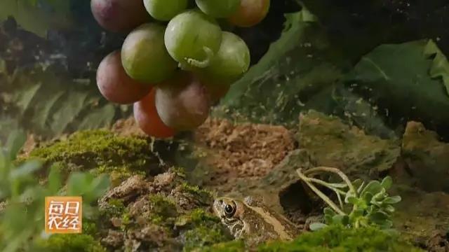 这个葡萄园里的主角不是葡萄 而是......