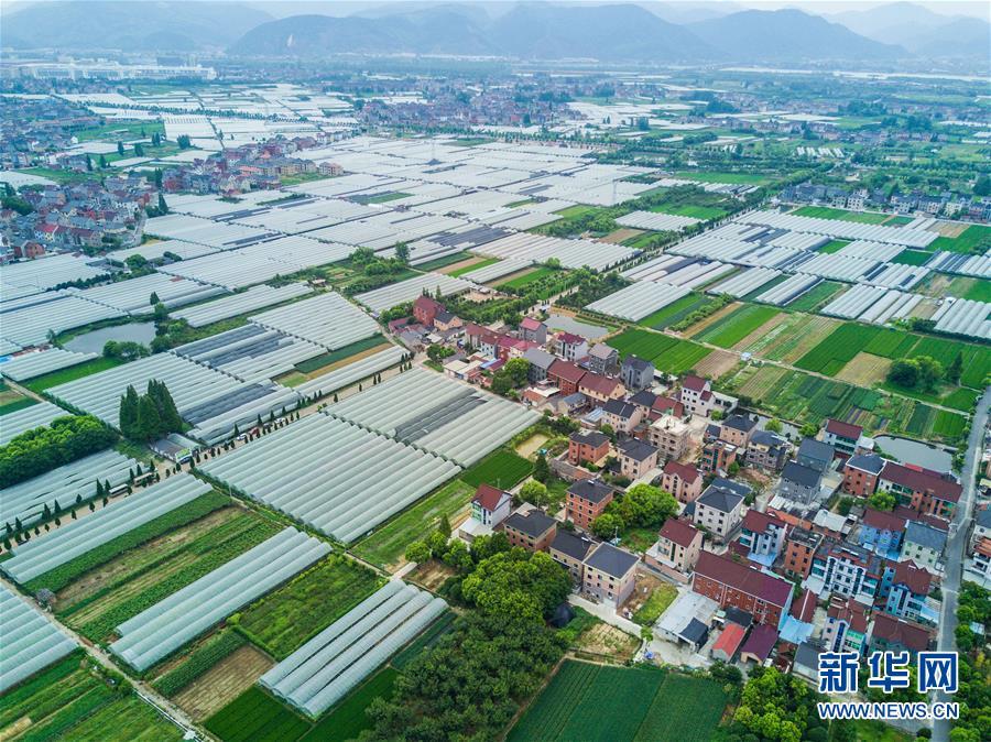 8月17日,空中俯瞰东洲街道陆家浦村的葡萄大棚。 新华社记者 徐昱 摄