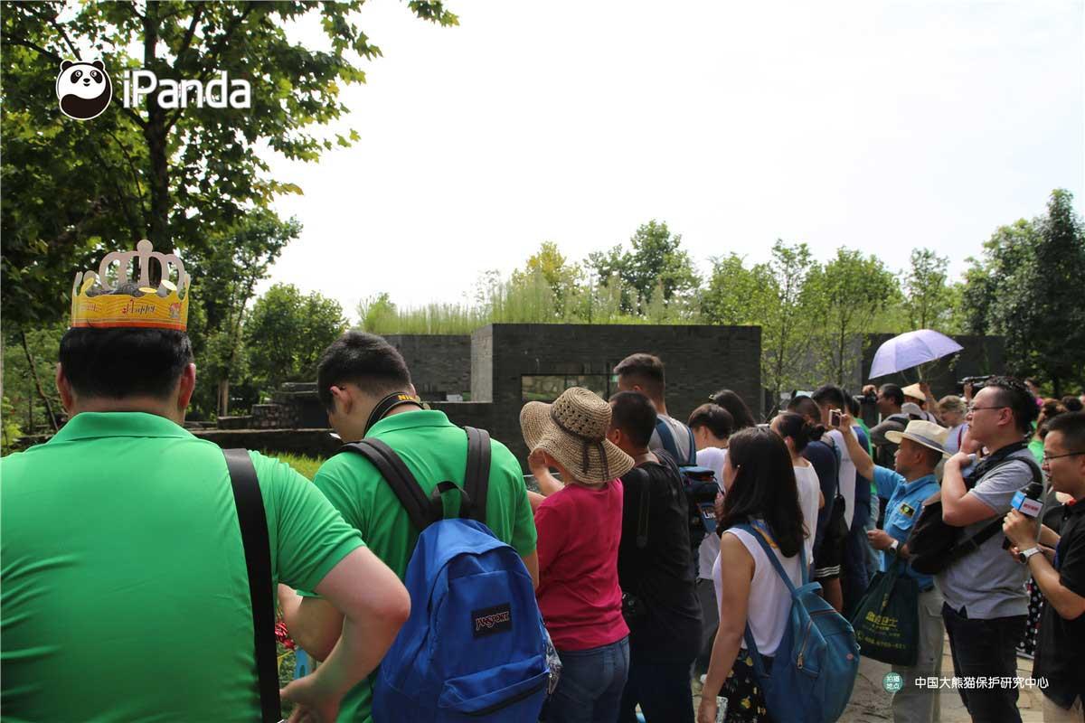 现场也聚集了来自世界各地的游客和熊猫粉丝