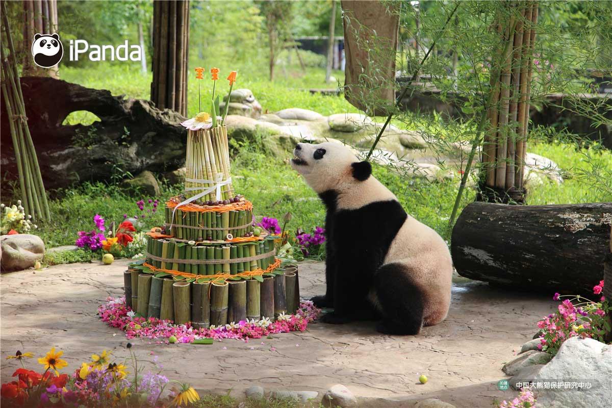 """""""宝宝""""仔细凝望着不一样的生日蛋糕。"""