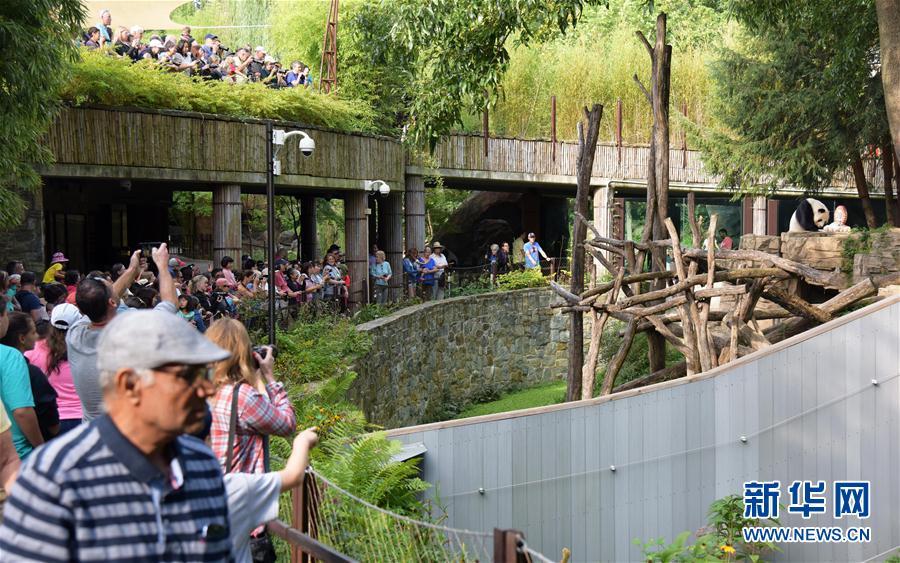 """8月27日,在华盛顿的美国国家动物园,人们参加大熊猫""""添添""""的生日庆祝活动。(新华社记者 殷博古摄)"""