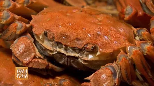 秋天来草原赏美景 怎能不尝尝这里的大闸蟹?