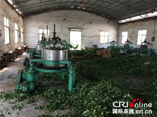 图片默认标题_fororder_揉茶机大大提高了企业的生产规模_副本_副本