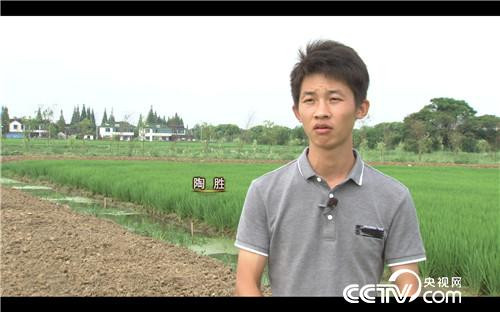 [vinbet浩博首页]稻田里抓出来的4000万