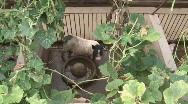 猪都过起了绿色的生活,你还在等什么?