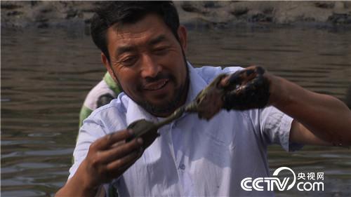 [致富經]赫廣武:如何養甲魚賺錢又出名