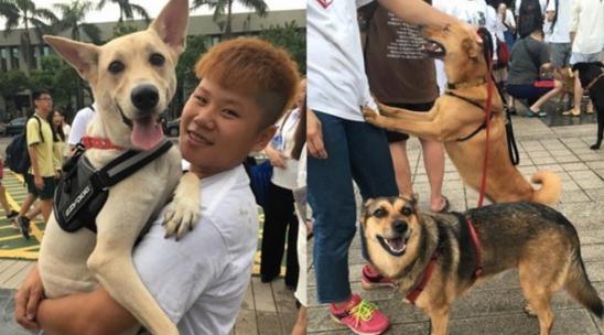 """过去为虐狗事件声援的动保团体曾到""""国防部""""抗议。(图片来源:台湾""""东森新闻云"""")"""